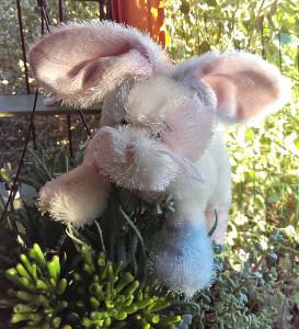 bunnywunny.main