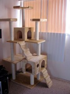 cattree2